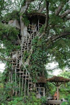 casa del árbol por longyly