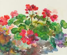 Artist Carol Curtis is an accomplished watercolor and needlepoint artist whose designs capture the essence of still life and botanicals in exquisite detail. Watercolor Images, Watercolour Painting, Watercolor Flowers, Art Floral, Flower Artists, Red Geraniums, Botanical Art, Art World, Art Tutorials