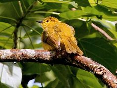 Wayanad Wildlife Sanctuary - in Kerala, India