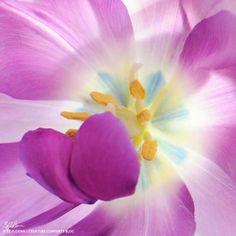 Beauty purple