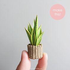 Miniature plant in woven pot