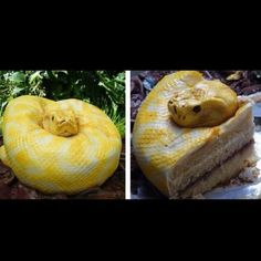 Snake cake! I'm sure this wouldn't make it into anyone's mouth if they're scared of snakes. Super surreal!