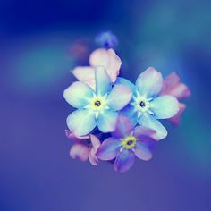 Forget Me Nots Flower Photography Blue Floral by DreamlikeDesign, £16.00