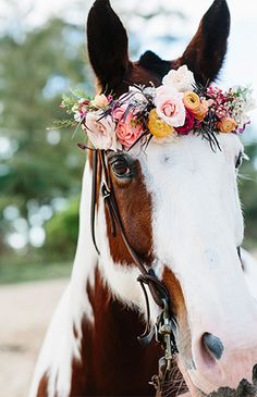 Horse with flower crown wreath on its head.