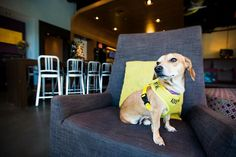 5 Pet-Friendly Hotels That Are Helping Rescue Dogs Find Forever Homes
