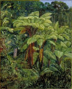 Group of Tree Ferns around the Spring at Matang, Sarawak, Borneo - Marianne North