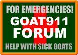 Ketosis (acetonemia) - Goats and Health - GOATWORLD.COM