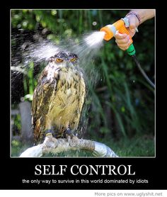 Self Control the only way to survive in this world dominated by idiots... This is how I feel at work sometimes
