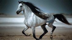 Horse Heaven ~ click thru to video!! Beautiful!!!'