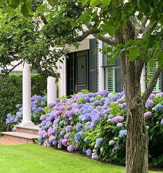 Dunes & Duchess-Stacy Kunstel (@dunesandduchess) • Instagram photos and videos Hydrangea Season, Painted Doors, Flower Boxes, Porch Decorating, Backyard Patio, Outdoor Lighting, Curb Appeal, Vineyard, Planters
