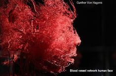 """Plastinated blood vessels of an human face are seen during a media viewing for the exhibition """"The Human Body"""" in Ostend, Belgium. Photo by Francois Lenoir—Reuters Medical Technology, Science And Technology, Technology News, Gunther Von Hagens, Circulatory System, After Life, Anatomy And Physiology, Blood Vessels, Belleza Natural"""