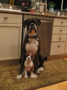 How could you not love boxers?
