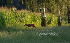 Motive finden - Conrad Amber Mountains, Nature, Travel, Animals, Wild Animals, Woodland Forest, Naturaleza, Viajes, Animales