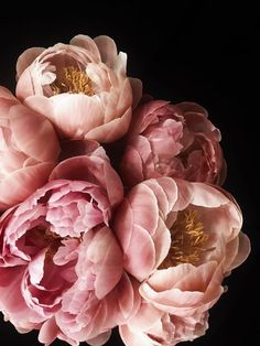 Peony 51 Photographic print by California based photographer Christina Fluegge Available as paper print on Hahnemuhle Photo Rag Paper. All photographic prints are limited edition pieces. Peonies Wallpaper, Flower Wallpaper, Food Wallpaper, Bouquet En Cascade, Bouquet Flowers, Ranunculus Flowers, Peony Painting, Flower Aesthetic, Aesthetic Drawing