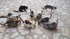 Greece cats