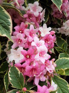 Diy Home Crafts, Ikebana, Mai, Rose, Flowers, Lawn And Garden, Plant, Pink, Diy Crafts