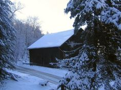 Homestead Living: Winter Tips for your Farm Animals and You