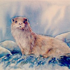 otter watercolour painting by rebecca yoxall