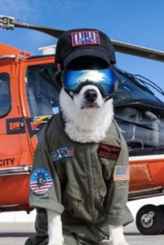 This badass Border Collie named Piper patrols airplane runways