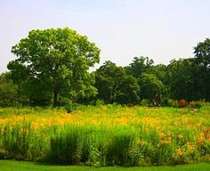 The Prairie/Savannah Garden is a certified prairie by the Conservation Foundation, which is home to a wide-variety of bird-life.