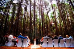 South Africa promises ideal wedding weather almost all year round, find out about our outdoor wedding highlights Forest Wedding Venue, Wedding Reception Venues, Outdoor Wedding Venues, South African Weddings, Wedding Highlights, Wedding Beauty, Intimate Weddings, Wedding Ideas, Wedding Stuff