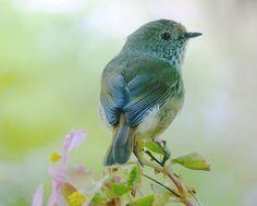 Who's a pretty bird?