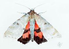 Buy Red Underwing (Catocala nupta), Watercolour by Andrzej Rabiega on Artfinder. Discover thousands of other original paintings, prints, sculptures and photography from independent artists.