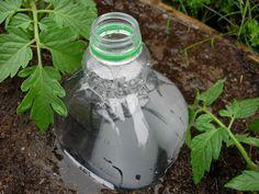 A pinner says, Drip irrigation- I do this every year and it works great! Especially during a long Texas drought- less water waste. The only thing that kept my plants going, and once the plants get growing they hide the bottles. Quick and easy way to fertilize too!
