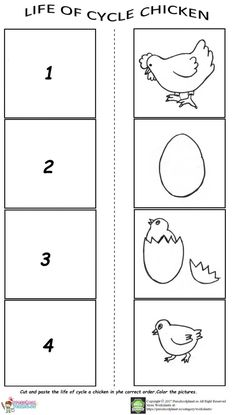 Life Of Cycle Worksheet For Preschool Worksheets Cycli on Life Cycle Of A Turtle Coloring Page Free Printable Pages Life Of Cycle Chicken Worksheet For Preschoolers kinder Preschool Learning, Kindergarten Worksheets, Worksheets For Kids, Preschool Activities, Montessori Kindergarten, Teaching, Apple Life Cycle, Life Cycle Craft, Farm Animal Crafts