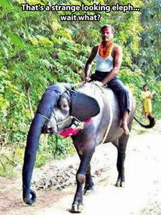 Strange looking elephant...