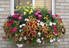 Window Box Planter contains yellow daisies, impatiens, coleus and petunias