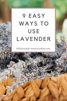Curious as to lavender oil uses and how to use the lavender plant? Check out these 9 unique ways to use lavender flowers, plant and oil around your home you probably haven't thought of before! From medicine, DIY cleaning recipes, candle color and food!