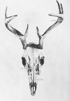 Print of Original Drawing Deer Skull Nature Art by Acaraho on Etsy