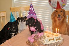 For small, intimate gatherings...just a cake, some favors and a happy bunch of pooches will do...
