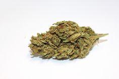 Blossom Green Flower Bud