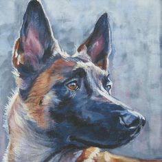 Belgian Malinois art print CANVAS print of LA Shepard painting 12x12- could be a dead ringer for our dog Duke