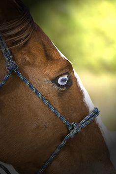 Blue Eye Horse Detail by a.pitch, via Flickr