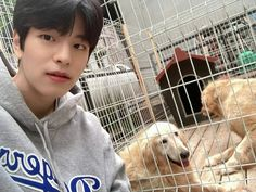 Stray Kids Seungmin, Kids Icon, Kids Board, Lee Know, Plastic Laundry Basket, Puppies, Twitter, Instagram, Lamb