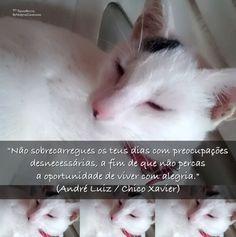 """""""Não sobrecarregues os teus dias com preocupações desnecessárias, a fim de que não percas a oportunidade de viver com alegria."""" (André Luiz / Chico Xavier)"""