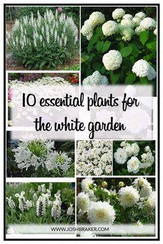 Top 10 essentielle Pflanzen für den weißen Garten. Es versteht sich von selbst, White Gard ... - Garten Gestaltung