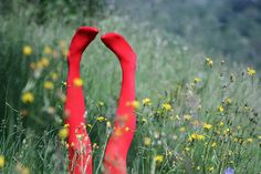 Red Tights Rollin' in Fun. Red Poppies, Yellow Flowers, Lens And Frames, Heather Chandler, Colored Tights, Shades Of Red, Red Green, Favorite Color, Pure Products