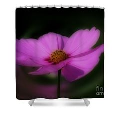 Striking pink cosmos flower shower curtain.  Photography by Susan.