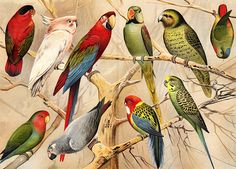 This is also like my 'Samantha's Diary' project, as she receives parrots as well as swans and other birds. These will be very useful to reference from for my work as they are detailed and realistic. However, for my illustrations I think I will go down a more simple-style route as although these are beautiful, it would be very hard to replicate for my work.
