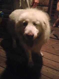 reunited  Photos of CT Lost Pets  Molly McCormickCT Lost Pets 11 mins near Chester, CT ·    Found walking near Whelen in Chester please help me find the owner.