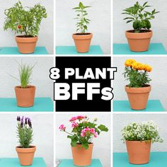 Grow these plants together for a healthier harvest! Plant your garden BFFs with Miracle-Gro® Performance Organics™. Garden Soil, Edible Garden, Garden Junk, Herb Garden, Garden Landscaping, Diy Crafts To Sell, Diy Crafts For Kids, Small Gardens, Outdoor Gardens