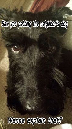 """This look is known as the """"Scottie Staredown"""".  I get it all the time from Fergus!"""