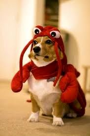 Why does my dog not own this!?!??