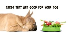 Carbs that are good for your dog http://slimdoggy.com/overview-of-carbohydrates-in-dog-food/