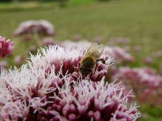Bee :-)