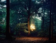 Lights in The Wood-3